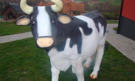 Mućka - super krowa do dojenia